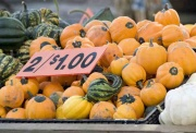 pumpkin-sale