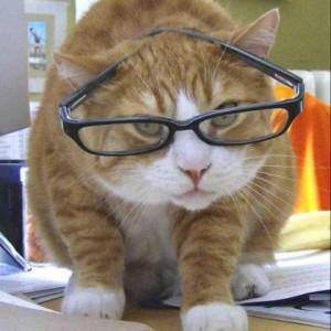siobahn-curious-cat