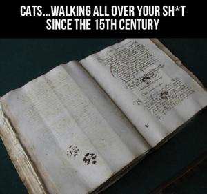 cats 15th century